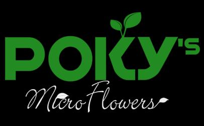 pokys.cz | Microgreens